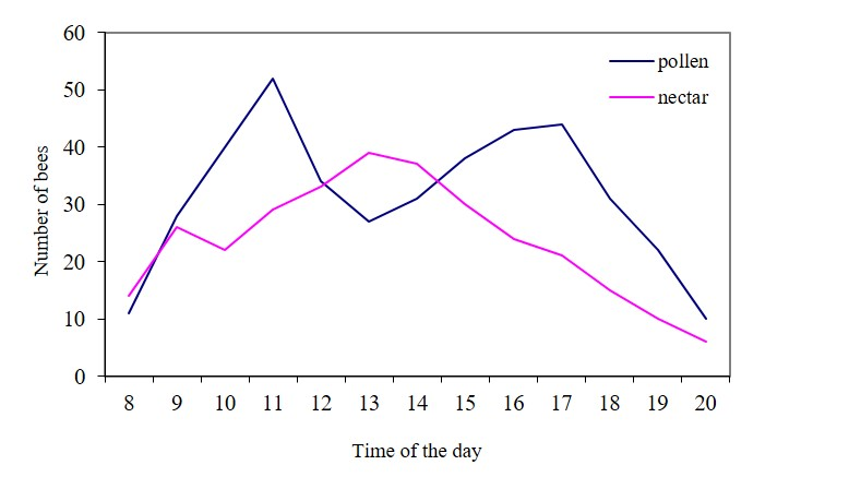 Daily dynamics of flight activity of bees during the flowering of fruit trees.
